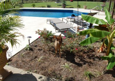 Sun Pool Company DEER Picture 2009_preview