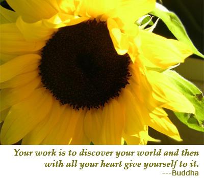 sunflower_crop
