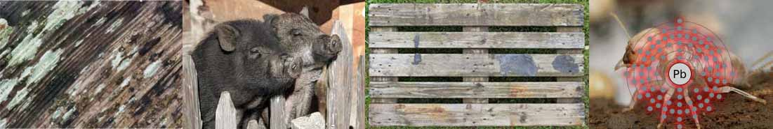 Determining if reclaimed wood is safe involves looking for mold, animal waste, exposure to chemicals, and no insect infestations.
