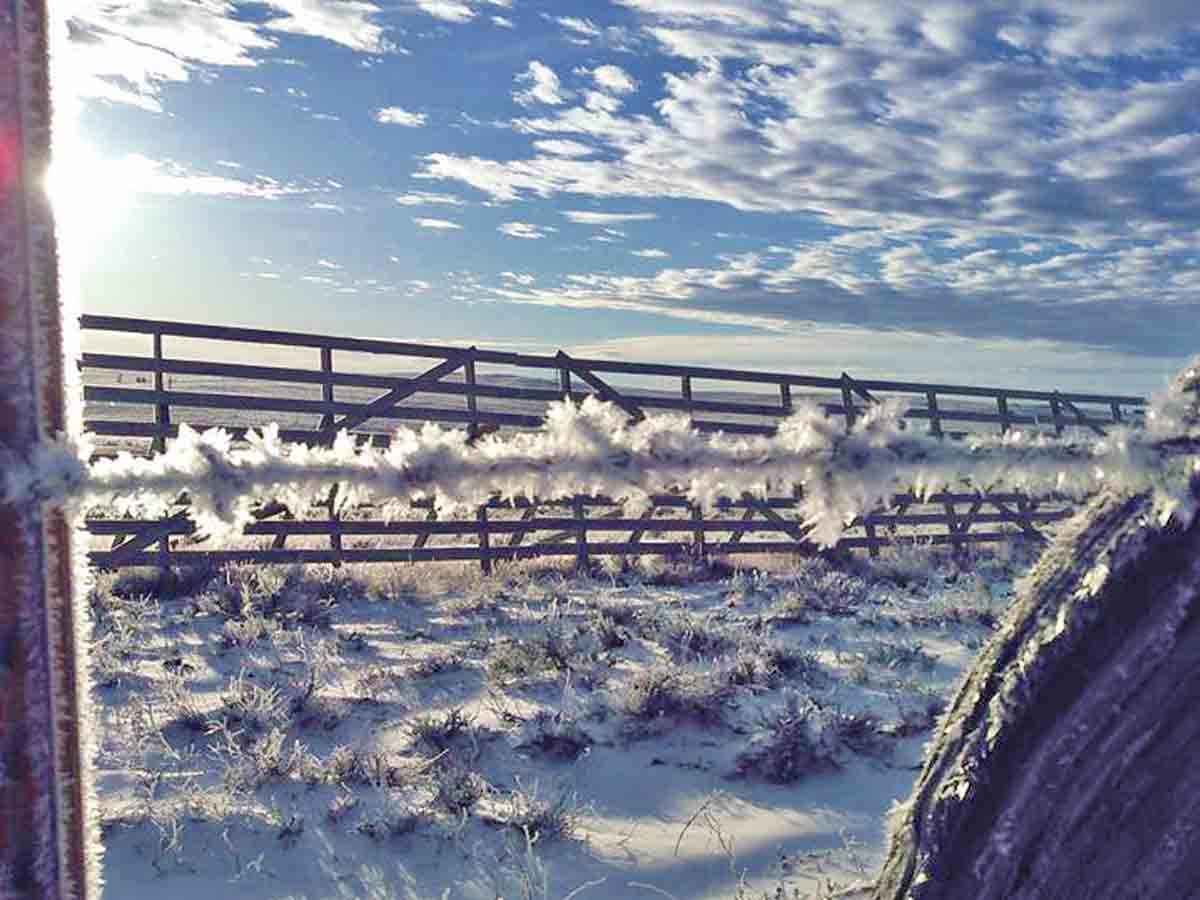Barbed wire covered in hoar frost in front of a Wyoming snow fence built and maintained by Centennial Woods.