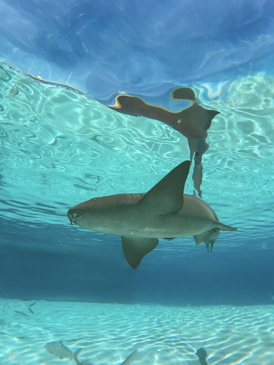 Rays and Sharks - 45