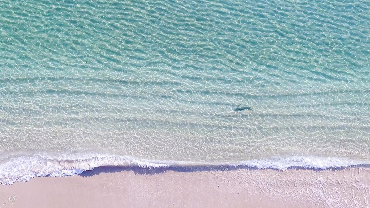 Rays and Sharks46