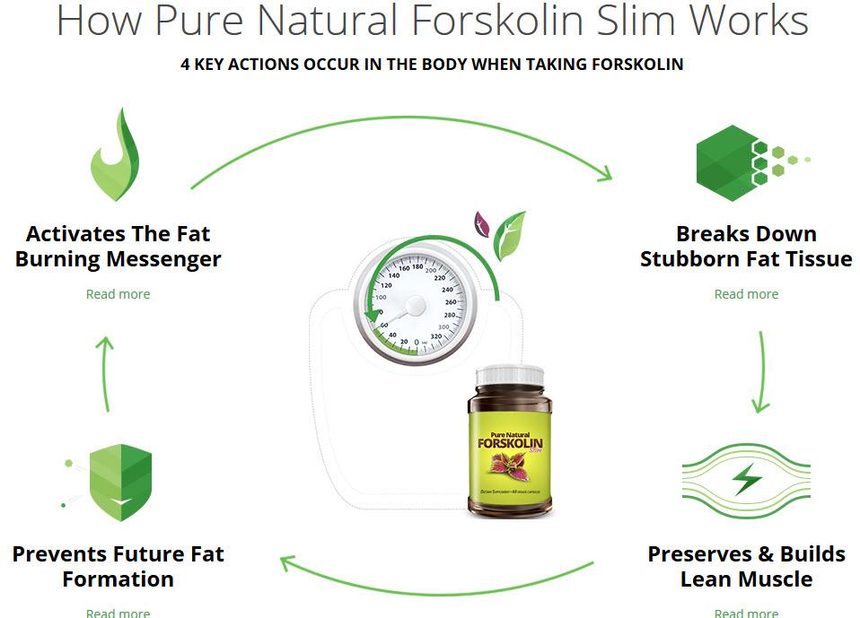 How Forskolin Works