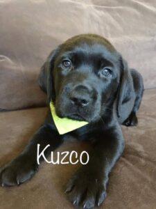 Kuzco 3