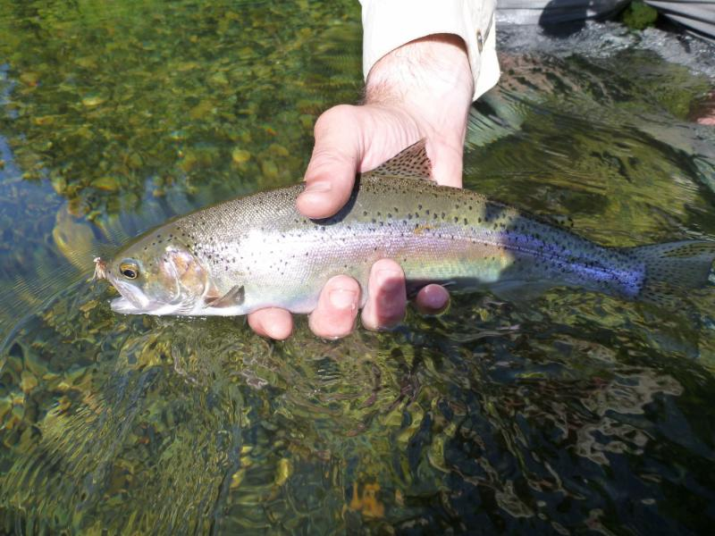 the-confluence-fly-shop-aug-02