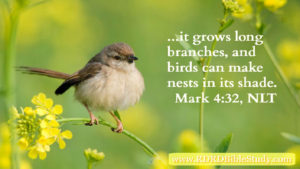RDRD Bible Study Mark 4:32; Transformed Thinking By Grace: Thank God he's an atheist.