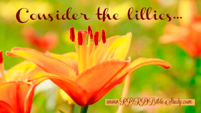 Consider The Lillies: The Gift Of God's Love For Our Children