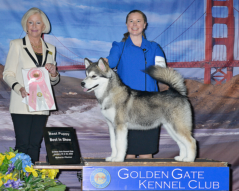 Best Puppy In Show Sunday