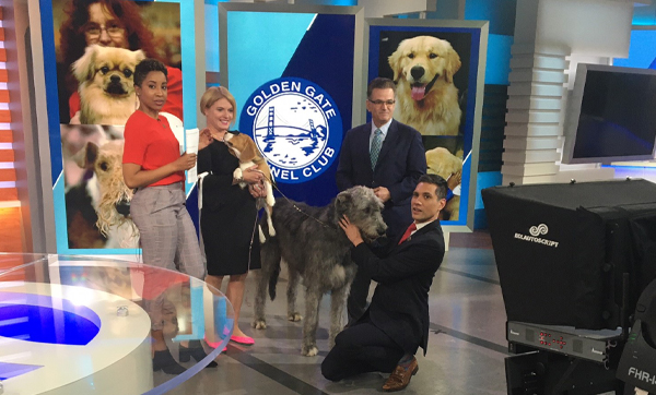 SHOW DOGS VISIT ABC7 FOR DOG SHOW PAW-REE-VIEW