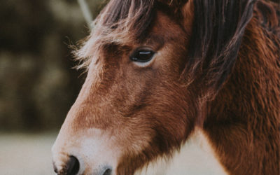 Speading Joy with Miniature Horses and Bunnies