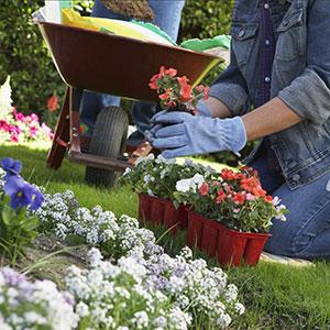 300p-Gardening-120294940