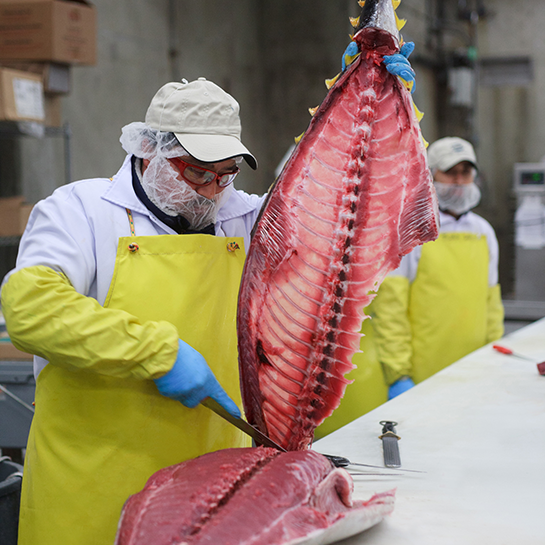Annasea Fresh Tuna