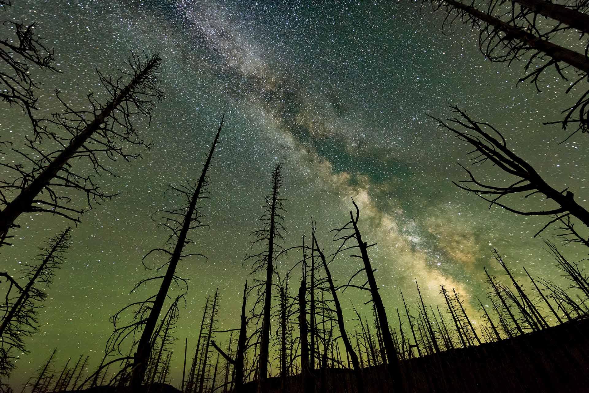 milky-way-through-trees-night-sky-photography