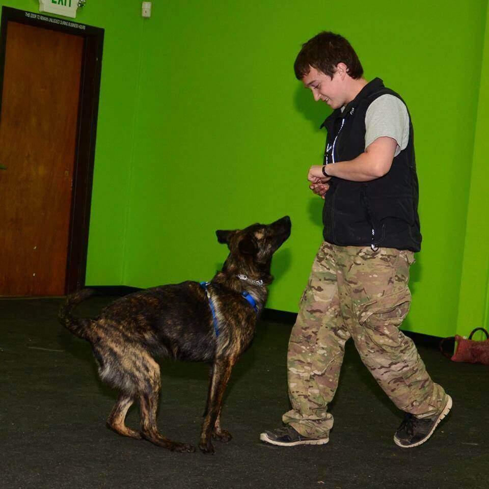 training dog