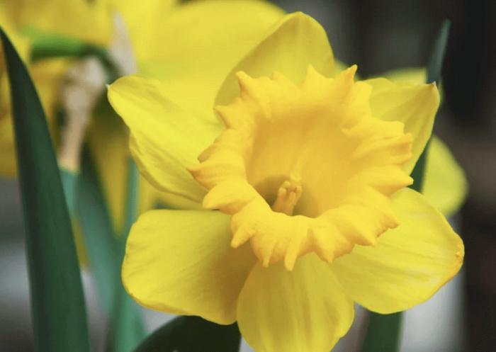 haberman flower