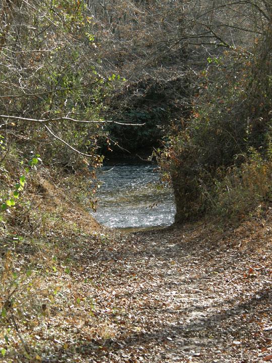 Dawson Forest Wildlife ManagementArea – Primitive Campsites - Dawsonville