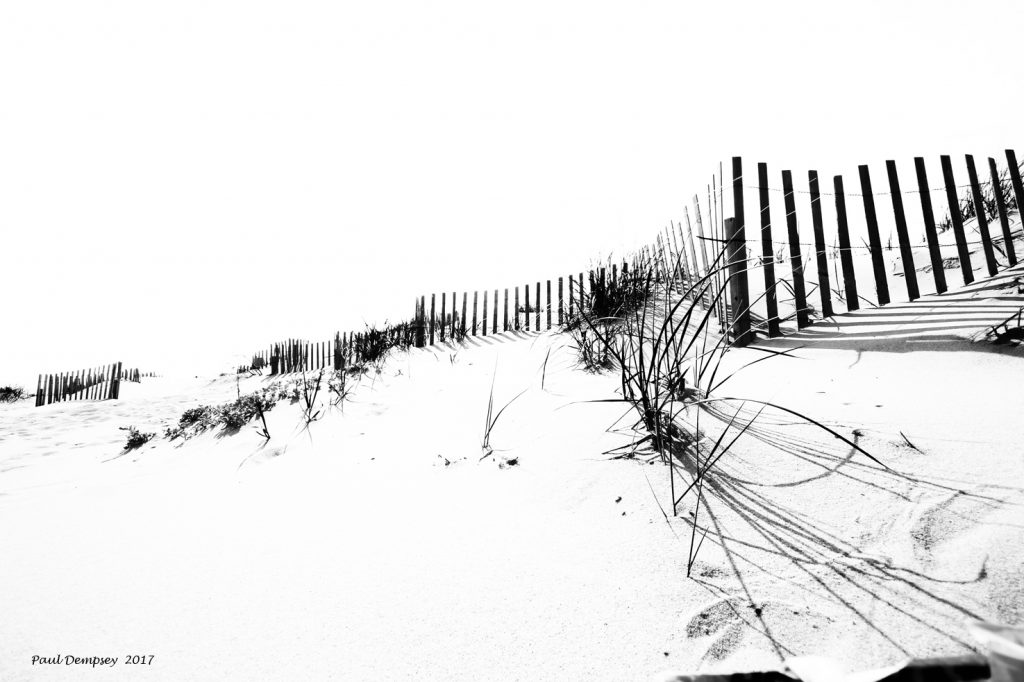 Beach Grass And Fence II
