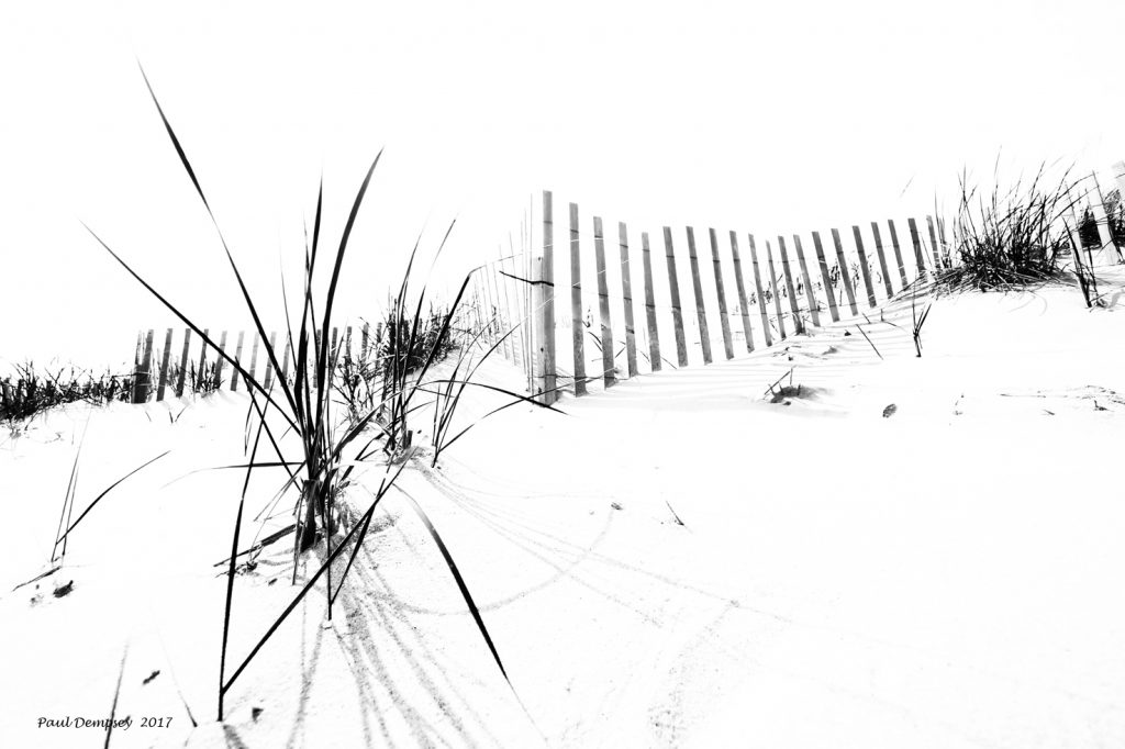 Beach Grass And Fence I