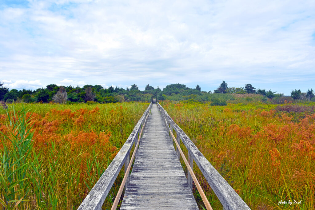 Quogue Village Wetlands Preserve