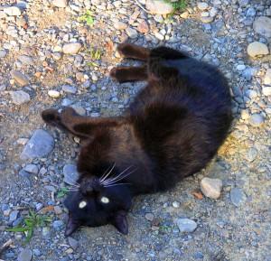 The Dreaded Black Poopus
