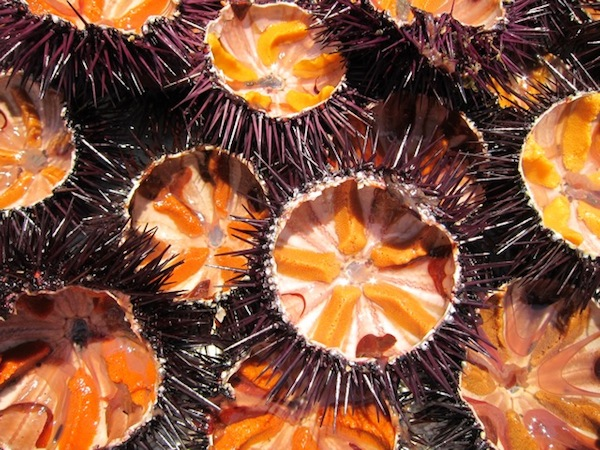 Sea urchins ready to be devoured.