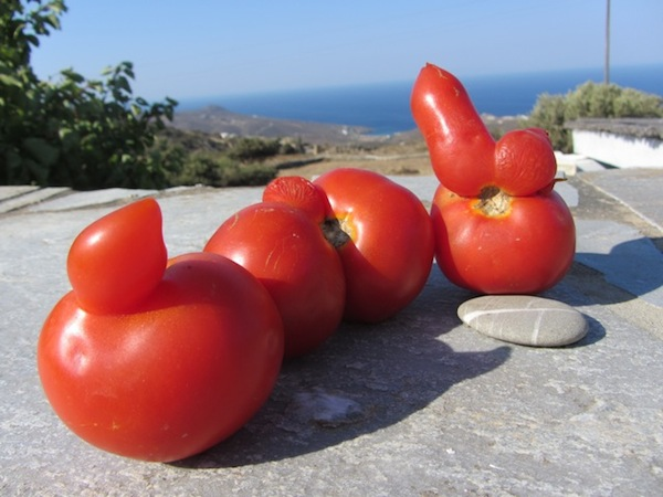 Andros tomatoes, nothing if not organic—but they do look rather suspicious, don't they?