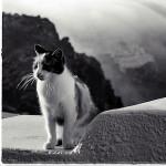 Strongyli Kittens XI.
