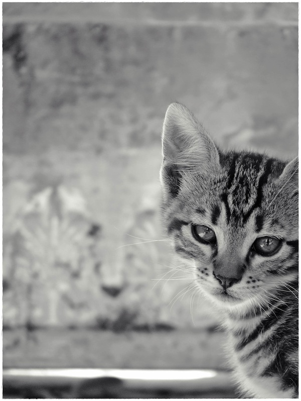 Strongyli Kittens XXIV