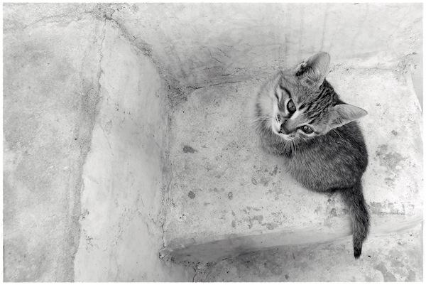Strongyli Kittens XXV