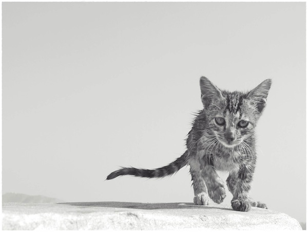 Strongyli Kittens LII