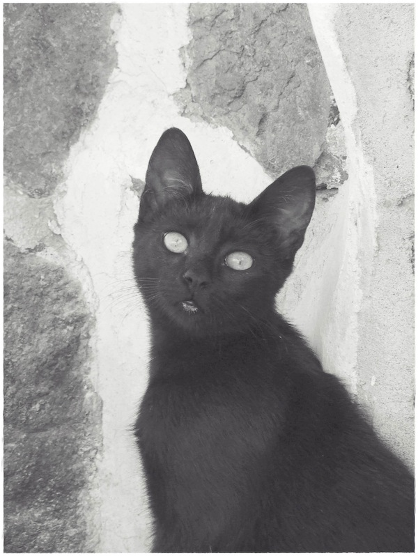 Strongyli Kittens LIII