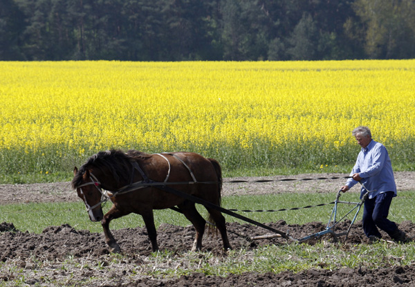 Ploughing when birdsong was more audible.