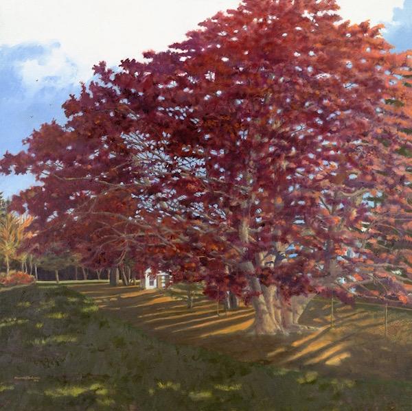 "Duxbury Copper Beech, Oil on Canvas, 36"" x 36"" (2013)."