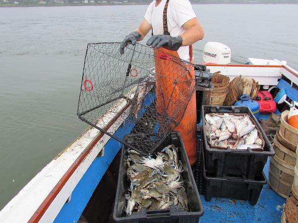 Hauling the crab pots.