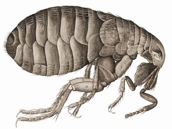 """""""So, naturalists observe, a flea/Has smaller fleas that on him prey;/And these have smaller still to bite 'em,/And so proceed ad infinitum."""""""