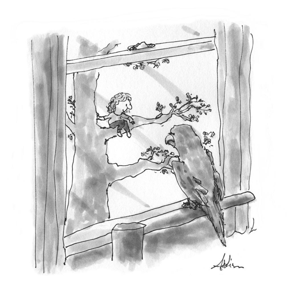 Kershaw parrot