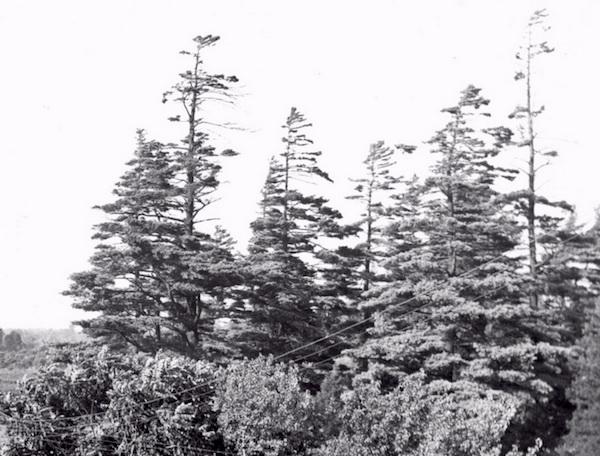 The grove.