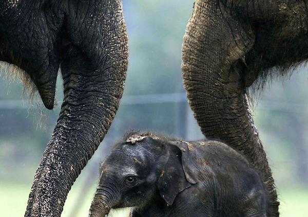 Elephant empathy. (Photo: Getty Images.)