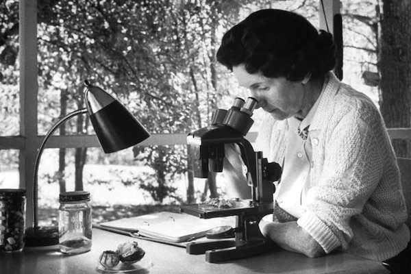 Rachel Carson, marine biologist and author of Silent Spring.