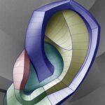 Ear design for sculptors.