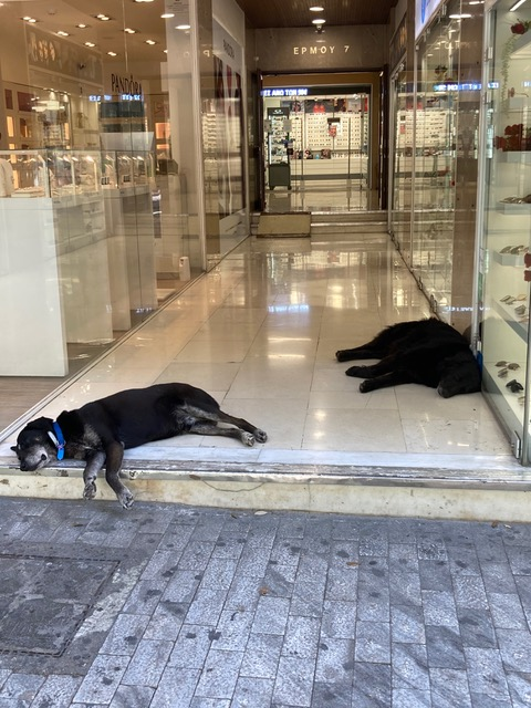 Happy pooches slumbering in an arcade on what is normally Athens's busiest shopping street.