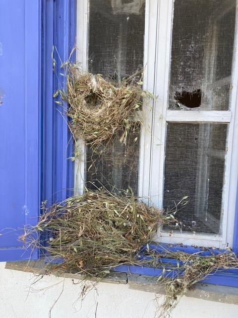 Huge nest in our bedroom window.