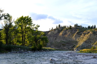 Cottonwood trees beside the Oldman River, Alberta.