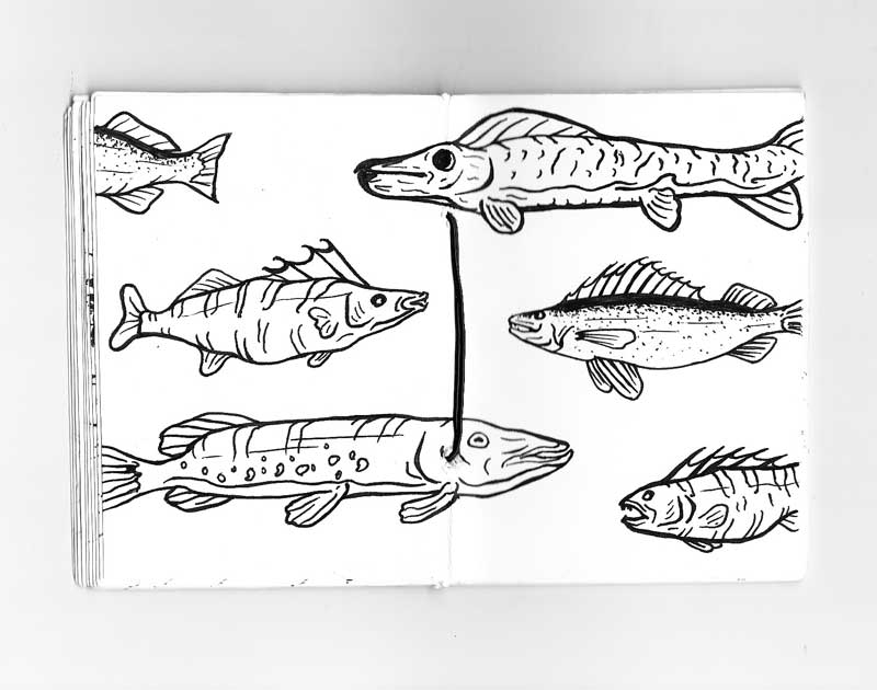 Fishing Sketches