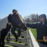 JA Horse