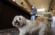 Texas dog first animal in state confirmed to have COVID-19