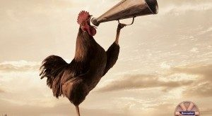 early-riser-rooster-300x225-300x165