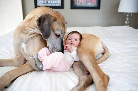 10 ReasonsWhy Having A Pet DOG Is The Best Thing Ever