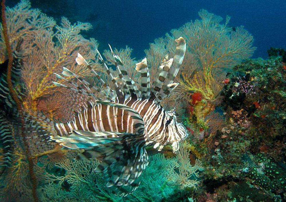 5 Best Diving Places In Malaysia For Scuba Diving Lovers
