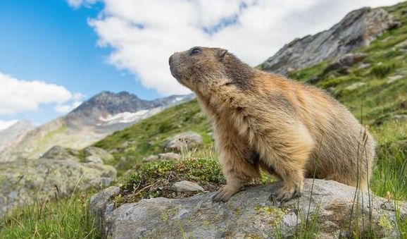 National Groundhog Day 2021 Wishes, Quotes, Messages, Image, Greetings